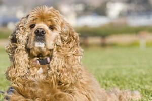 Как самостоятельно сделать сухой корм для собаки