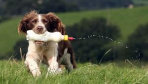 Гипоалергенный корм для собаки