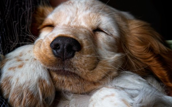 Royal Canin (Роял Канин) | Для взрослых кошек | Корма