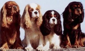Как правильно хранить сухой корм для собак